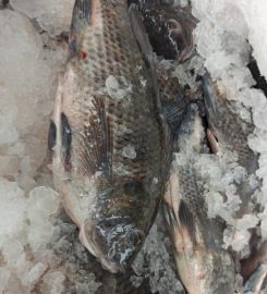 TILAPIA MOJARRAS – Panan Kay – Pescados y Mariscos